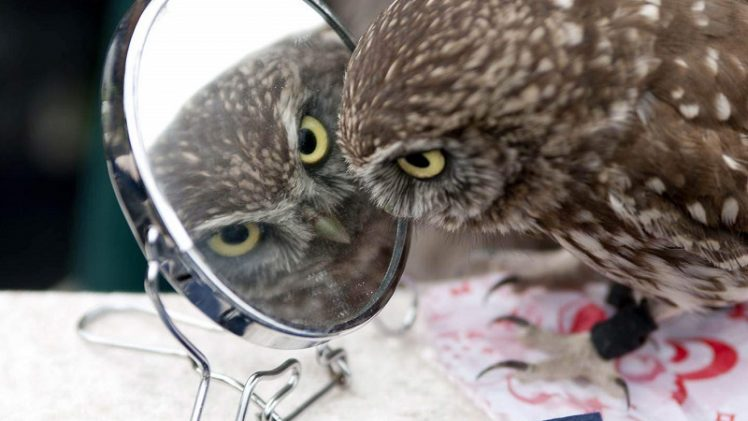 owl-in-mirror